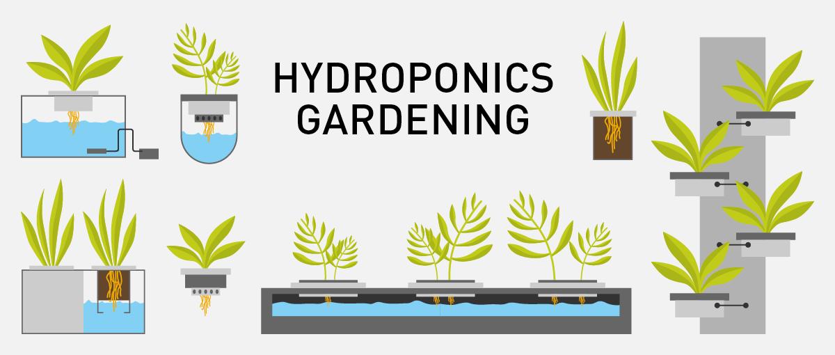hydroponics-gardening